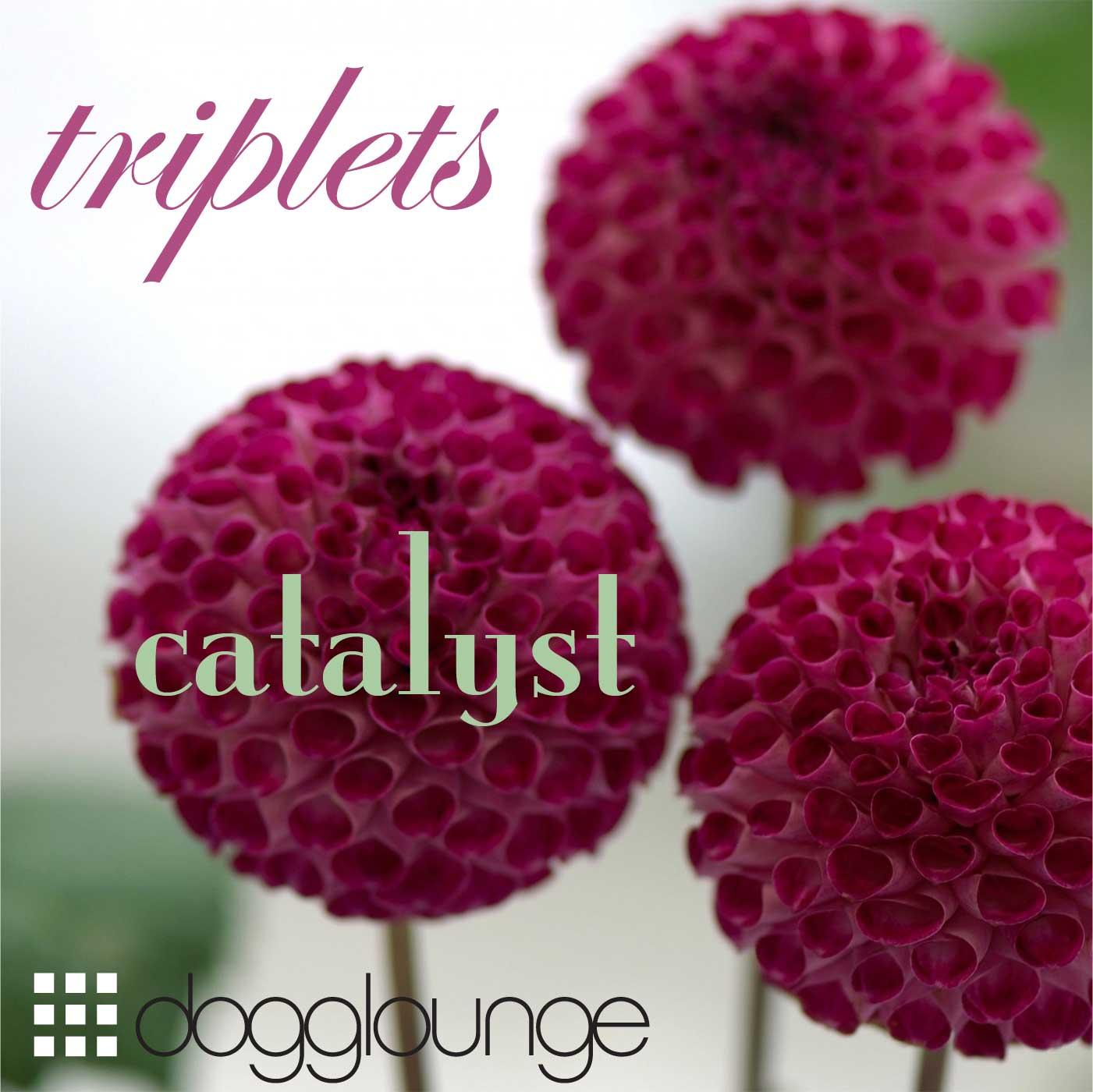 photo of three purple dahlias